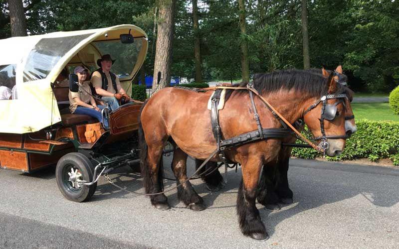 Ausfahrt mit Pferdekutsche
